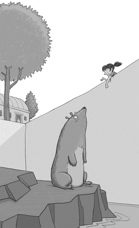 bear-zoo-no8c